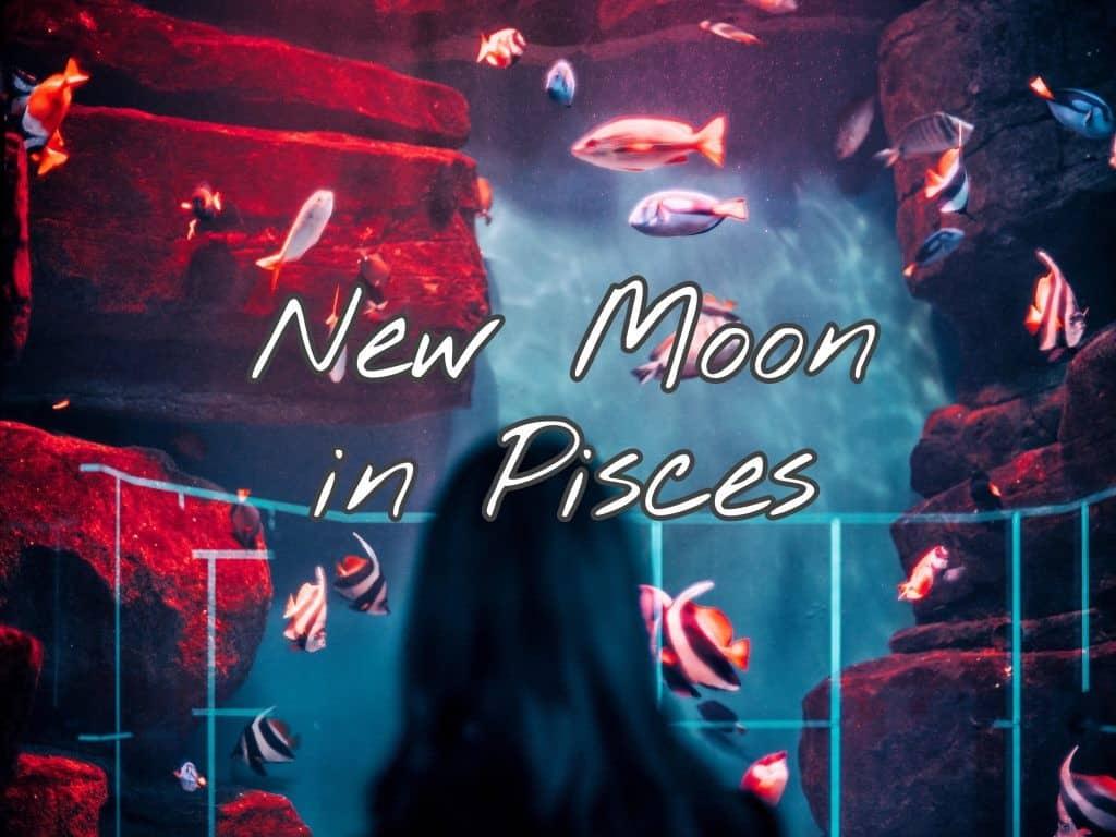 New Moon in Pisces - A Higher Power - A Deeper Love